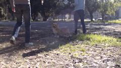 Gay Couple Take Corgi Dog For A Walk In Park, Owner Shakes Bag Of Treats For Dog Stock Footage