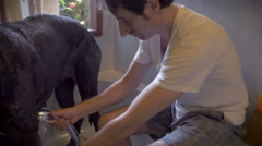 Handheld shot of a man enjoying giving his great dane dog a bath using a sprayer Stock Footage