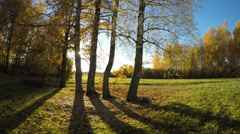 Beautiful autumn evening sunshine in birch grove and shadows. Timelapse 4K Stock Footage