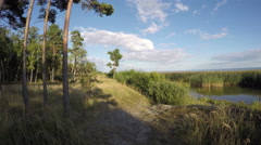 Natural pine forest near sea coast  and evening clouds. Timelapse 4K Stock Footage