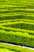 Green hedge labyrinth in french garden - stock photo
