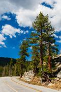 Tree at Tioga Pass, Yosemite National Park, Sierra Nevada, USA - stock photo