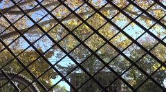 Barrier of interwoven strips, rods, wire in the foreground, autumn leaves Stock Footage
