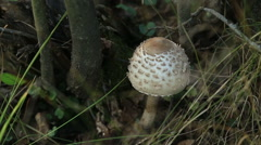 Mushroom in forest Stock Footage