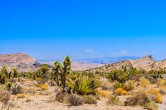 Red Rock Canyon panoramic, Mojave Desert, Nevada, USA - stock photo