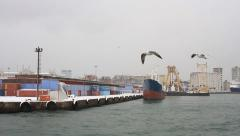 Ship-following seabirds flying against Seaport Stock Footage