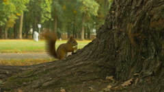 Squirrel eats Apple in the Park (Slowmotion 96 fps) Stock Footage