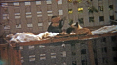 1959: Monkey and cat play together as animal companion buddy friends. - stock footage