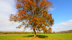 Strong wind blows dry leaves from tree toward camera in autumn Stock Footage