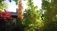 autumn impresssion - tree leaves in front of a house - stock footage