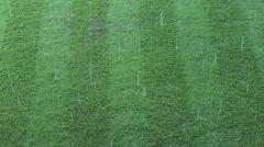 Rain on greensward Stock Footage