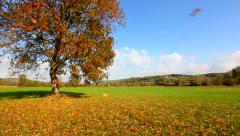 Strong wind blows dry leaves from tree in autumn - stock footage