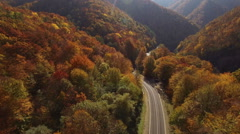 Aerial View Autumn Forest with Road - stock footage