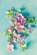 Artistic floral backgrounds with hydrangea flowers and watercolour paint - stock photo