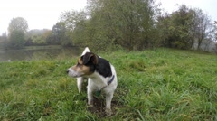 Small dog looking around on a grass field, groundview Stock Footage