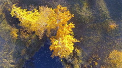 Beautiful yellow birch from a height. Approximation from above Stock Footage