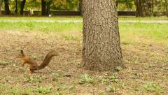 Squirrel finds the Food in the Park Stock Footage