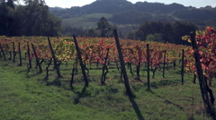 Autumn vineyard in Oltrepo Pavese, northern Italy. Stock Footage