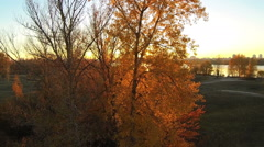 The sun shines through the yellow leaves of the tree. Camera moves up. Aerial Stock Footage