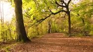 Stock Video Footage of Beautiful Autumn in Drumpellier Country Park, Coatbridge, Scotland