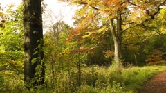 Beautiful Autumn in Drumpellier Country Park, Coatbridge, Scotland Stock Footage