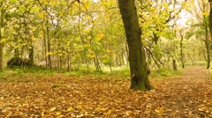 Beautiful Autumn in Drumpellier Country Park, Coatbridge, Scotland - stock footage