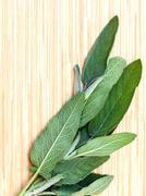 Alternative mediterranean medicinal plants Salvia officinalis or sage for med Stock Photos