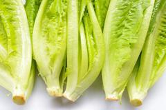 Fresh Cos Lettuce Stock Photos