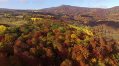 Aerial View Autumn Forest Stock Footage