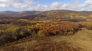 Stock Video Footage of Aerial View Autumn Forest