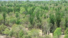 Dry spiny forest 1 Stock Footage