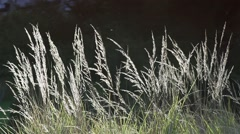 Insects fly in slow motion around dry grass spectacular illuminated by the su Stock Footage