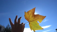 Hold a beautiful yellow leaf toward sky,autumn,highspeed red autumnal leaves Stock Footage
