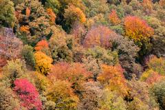 Autumn forest close up in La Garrotxa, Catalonia Stock Photos