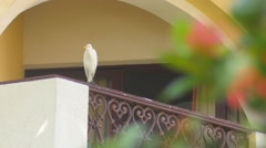 Stock Video Footage of Heron on the balcony
