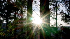 Spider web sunny back light. Stock Footage