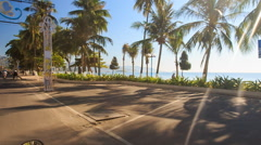 Stock Video Footage of camera moves past embankment large palms by azure sea