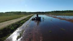 Harvesting on a cranberry farm - stock footage