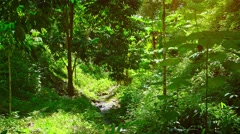 Cool Stream Following a Rocky Path through a Tropical Wilderness Stock Footage