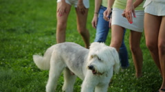 Beautiful girls play with dog in park Stock Footage