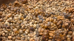 Unwashed Coffee Beans from the Stool of Civet Cats for Kopi Luwak Stock Footage
