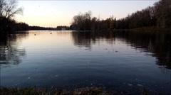Rookery on Lake Park in Gatchina, Leningrad region, Russia. Stock Footage