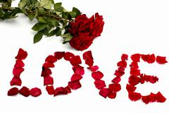 Inscription love from petals of roses, and one rose, isolate, Stock Photos