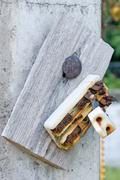 Stock Photo of Old retro and broken dirty rust electric circuit breaker mounting on wood