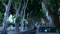 Tree alley Road with cars  A boulevard - stock footage
