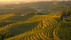 4K Aerial: Over Vineyard Hills at Sunset Stock Footage