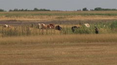 Cowherd and cows on pasture Stock Footage
