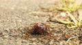 Ants eat the Plum on the Ground Footage