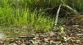 Fallen leaves on the ground in a swamp slider shot 4k or 4k+ Resolution