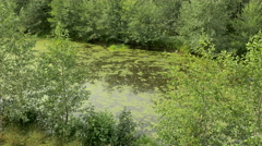Swamp in the national wildlife reserve. Autumn daytime. Smooth dolly shot. - stock footage